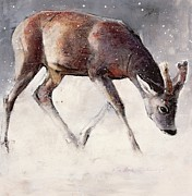 Grazing Snow Metal Prints - Roe Buck - Winter Metal Print by Mark Adlington