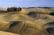 Tuscan Landscapes Prints - Rolling Fields And Cypress Trees In Print by Axiom Photographic