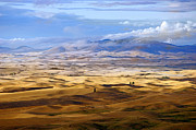 John Buffington - Rolling Hills of Palouse