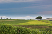Rolling Tuscany 2 Print by Patrick English