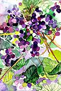 Purple Grapes Prints - Roman Grapes Print by Mindy Newman