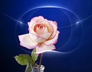 Romance Rose Print by M K  Miller