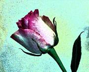 Romance Rose Print by Marsha Heiken