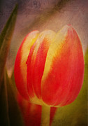 Tulip Mixed Media - Romance tulip by Angela Doelling AD DESIGN Photo and PhotoArt
