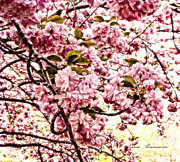 Hdr Mixed Media Posters - Romantic Cherry Blossoms Poster by Zeana Romanovna