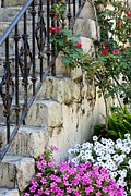 Stone Steps Framed Prints - Romantic Steps Framed Print by Sophie Vigneault