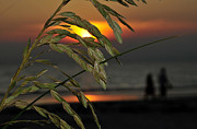 Sea Oats Prints - Romantic stroll Print by David Lee Thompson