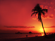 Palm Tree Posters - Romantic Sunset Poster by Melanie Viola
