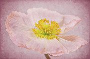 Delicate Mixed Media - Romantico by Angela Doelling AD DESIGN Photo and PhotoArt