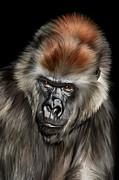 Gorilla Digital Art Metal Prints - Romina Metal Print by Julie L Hoddinott