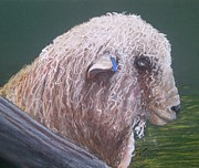 Bred Originals - Romney Ram by Jan Lowe