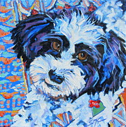Havanese Paintings - Roo by Sarah Gayle Carter