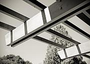 Tree Lines Prints - Roof Beams Print by Edward Myers