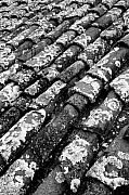 Gaspar Avila Framed Prints - Roof tiles Framed Print by Gaspar Avila