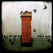 Starlings Digital Art Metal Prints - Roof Top Hoppers Metal Print by Gothicolors And Crows