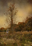 Bird House Prints - Room For One Print by Robin-lee Vieira
