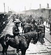 Horse And Riders Prints - Roosevelts Rough Riders in Tampa Florida - c 1898 Print by International Images