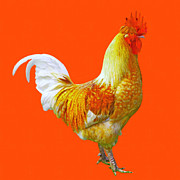 Firey Posters - Rooster 3 - Painterly Poster by Wingsdomain Art and Photography