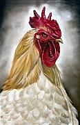 Farm Rooster Painting Framed Prints - Rooster Head II Framed Print by Ilse Kleyn