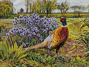 Pheasant Paintings - Rooster Pheasant in the Garden by Steve Spencer