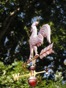 Weathervane Posters - Rooster Weathervane Poster by Pamela Smith