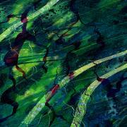 Root Canal Print by Rachel Christine Nowicki