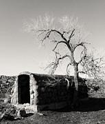 TONY GRIDER - Root Cellar