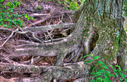 Tree Roots Digital Art Posters - Root Staircase Poster by Chris Witte