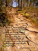 Stair Walk Framed Prints - Rooted Path with Scripture Framed Print by Cindy Wright