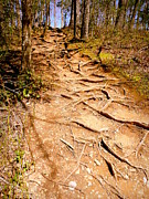 Stair Walk Prints - Rooted Pathway Print by Cindy Wright