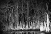 Lumbering Art - Roots in a Row by Jack Norton