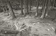James Steele - Roots