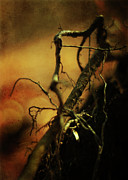 Tree Roots Photo Metal Prints - Roots of Life Metal Print by Rebecca Sherman