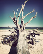 Tree Roots Metal Prints - Roots to the Sky-Vintage Metal Print by Chris Andruskiewicz