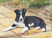 Cute Pastels Framed Prints - RORY border collie puppy Framed Print by Richard James Digance