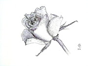 Rose Drawings Prints - Rose 002 Print by John Cryar