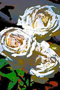 Three Roses Prints - Rose 126 Print by Pamela Cooper