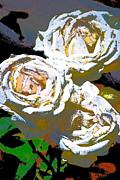 Rose 126 Print by Pamela Cooper