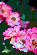 Rose 130 Print by Pamela Cooper