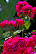 Floral Metal Prints - Rose 135 Metal Print by Pamela Cooper