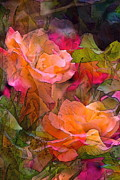 Multicolored Roses Prints - Rose 146 Print by Pamela Cooper