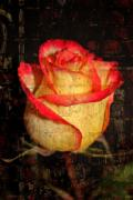 Peach Roses Prints - Rose and Brick Print by Cathie Tyler