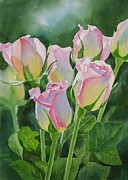 Bud Painting Framed Prints - Rose Array Framed Print by Sharon Freeman