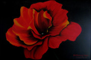 Quadro Paintings - Rose by Betta Artusi