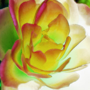 Effusive Art - Rose Blush by Lynne Furrer
