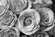Bouquet Of Roses Framed Prints - Rose Bouquet in Black and White Framed Print by James Bo Insogna