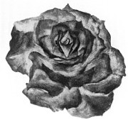 Rose Drawings Prints - Rose BW Inverse Print by Jessie Leahy