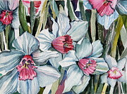 Feminine Drawings Originals - Rose Cupped Daffodils by Mindy Newman