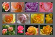 Flower Artwork Posters - Rose Fine Art Collection Poster by Juergen Roth