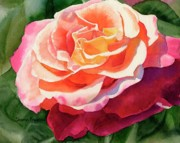 Realistic Watercolor Prints - Rose Fringed with Red Petals Print by Sharon Freeman